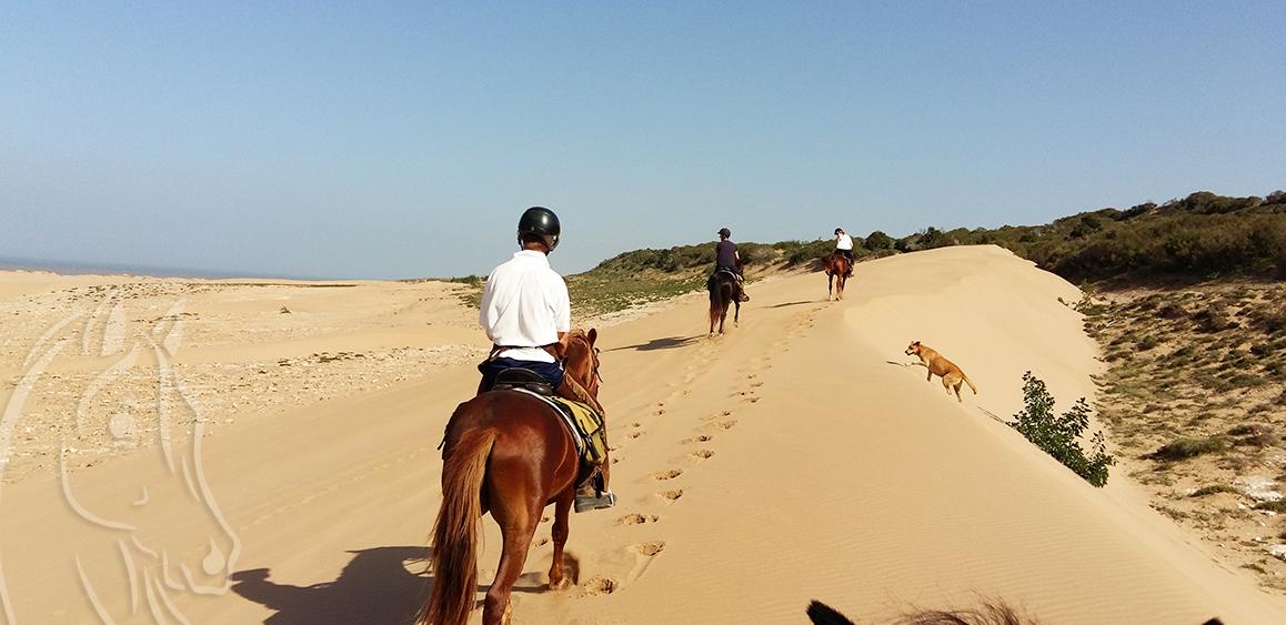 Balade Cheval Essaouira Maroc - Equievasion