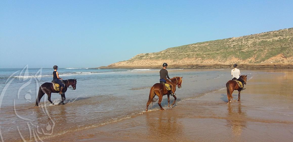 Horse Riding Essaouira Morocco - Equievasion