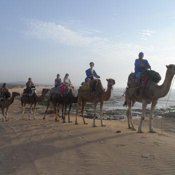 Balade Dromadaire Chameau Essaouira Maroc - Equievasion