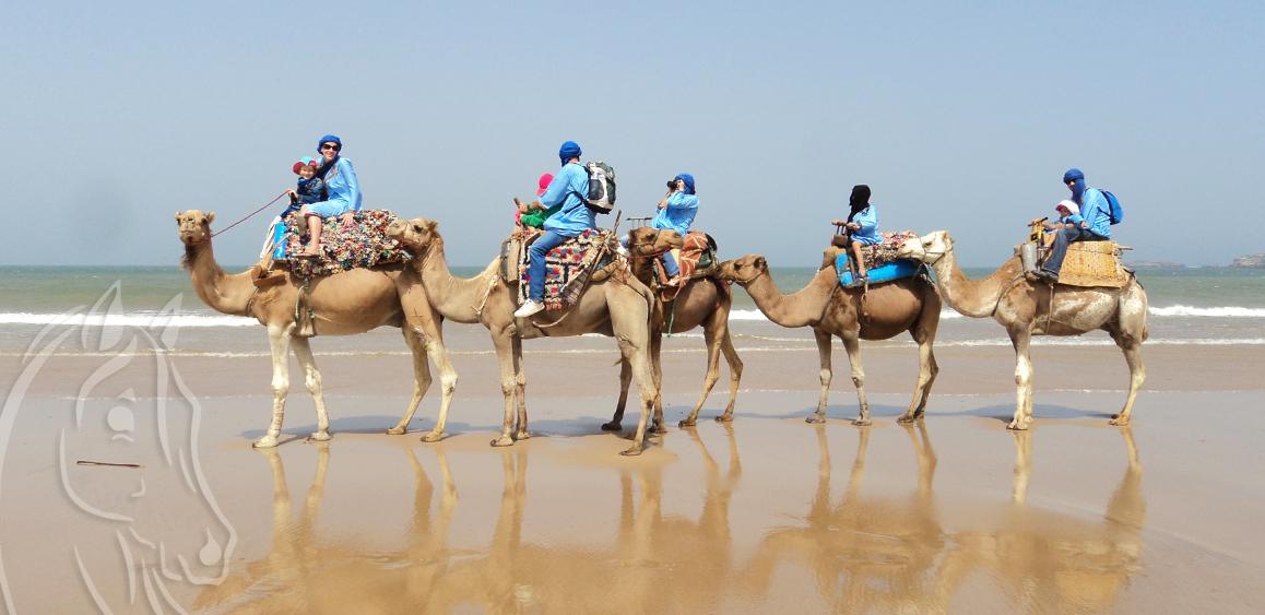 Balade Dromadaire Essaouira Maroc - Equievasion