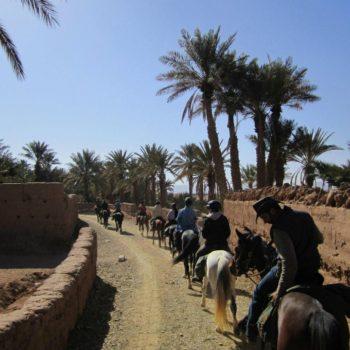 Circit Cheval Desert Maroc Equievasion