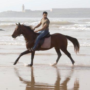 Equipe Club Equestre Equievasion Essaouira Maroc