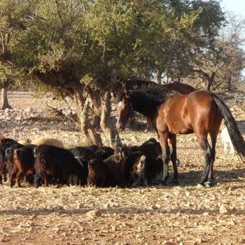 Excursion Rando Balade Cheval Essaouira Equievasion