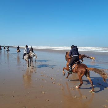 Horse Riding Essaouira Morocco