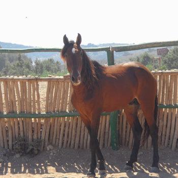 Horses Ranch Equievasion Essaouira Morocco