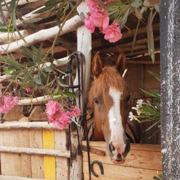 Ranch Equestre Equievasion Essaouira Maroc