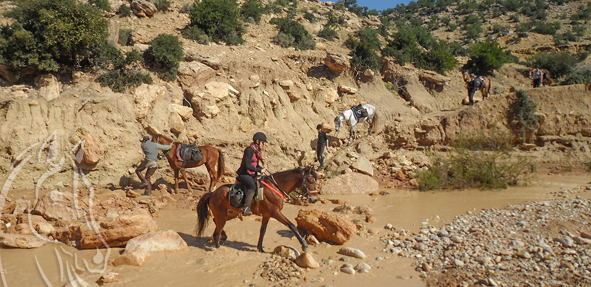 Randonnee Cheval Circuit Argan Plages Essaouira Maroc - Equievasion