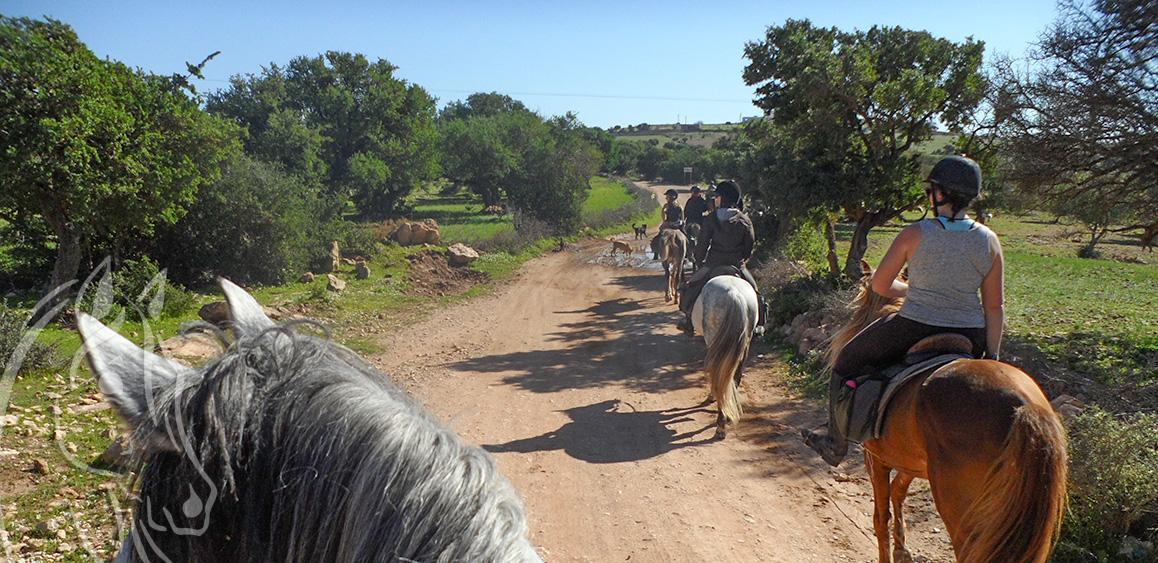 Randonnee Cheval Route Huile Argan Essaouira Maroc - Equievasion