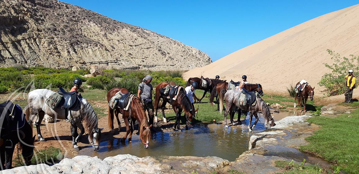 Randonnee Cheveaux Equievasion Essaouira Maroc
